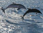 Aktiv auf Teneriffa - Delphin und Walbeobachtungen