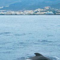 Delfin und Wal Beobachtung