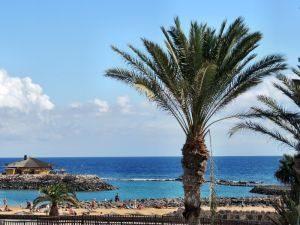 Palme am Strand von Caleta de Fuste, Fuerteventura