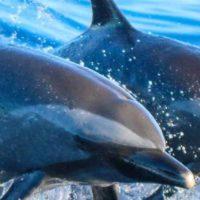 Delfin und Wal Touren auf Gran Canaria
