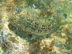 Unterwasserwelt auf den kanrischen Inselns