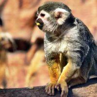 Affe im Monkey Park