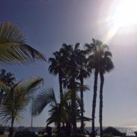 Palmen an der Costa Adeje