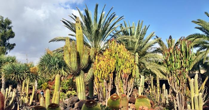 Botanischer Garten im Oasis Park