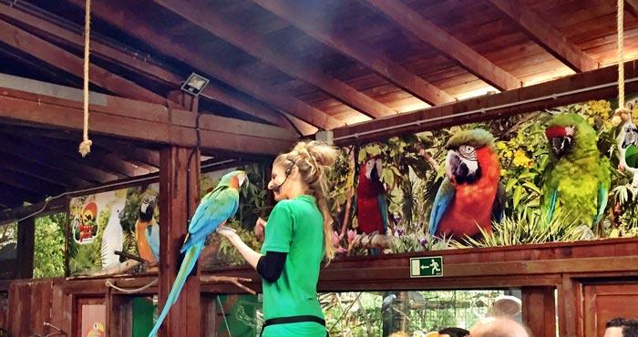 Papagei Show im Oasis Park Fuerteventura