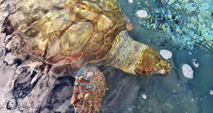 Schildkröten Aufzuchtstation, Tipp für Kinder