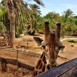 Sehenswertes in Costa Calma