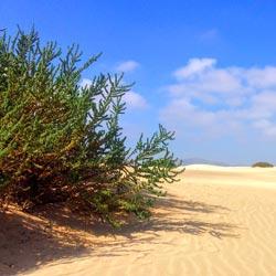 Klima und beste Reisezeit in Corralejo