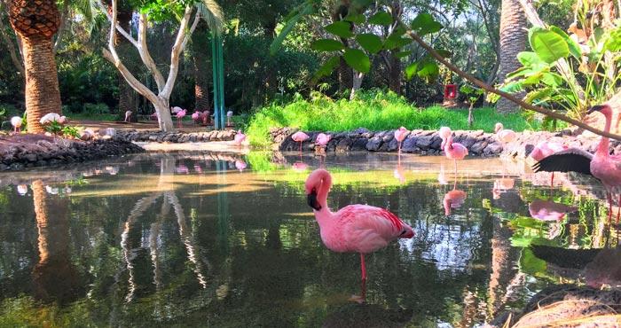 Flamingos im Oasis Park