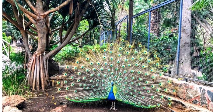 Vögel im Palmitos Park