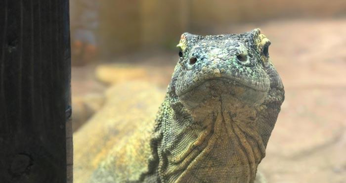 Reptilien im Palmitos Park