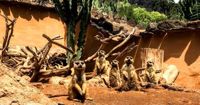 Säugetiere im Palmitos Park