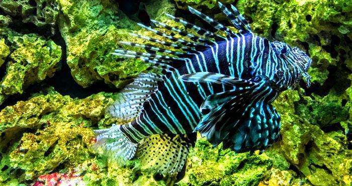 Aquarium im Palmitos Park
