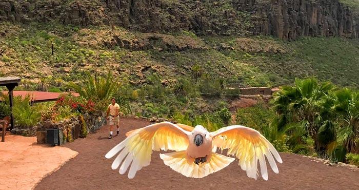 Papageienshow im Palmitos Park