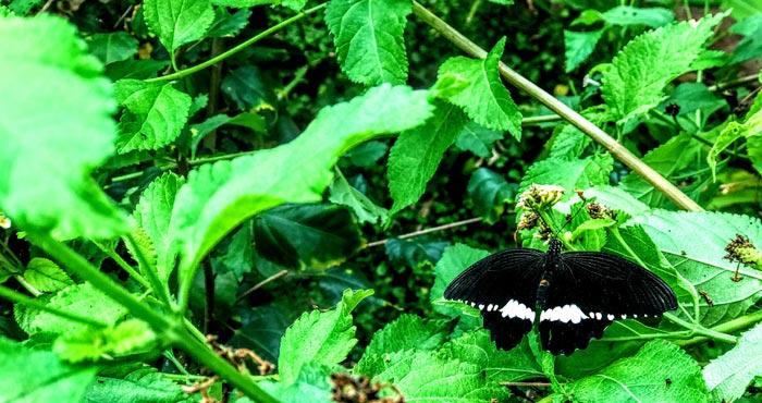 Schmetterlingshaus im Palmitos Park