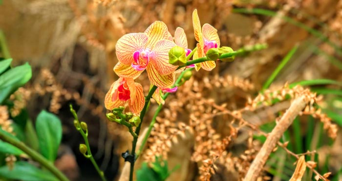 Orchideen im Palmitos Park