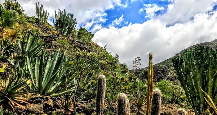 Kaktusgarten im Palmitos Park