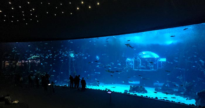 Das Tiefseeaquarium im Poema del Mar