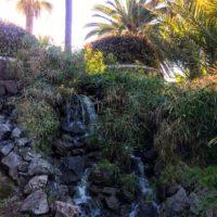Palmen und Wasserfall