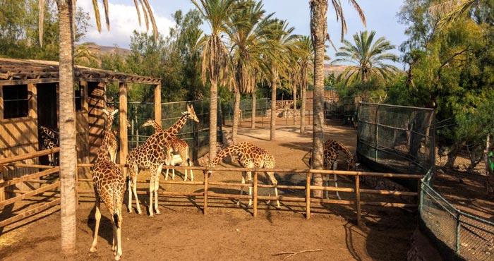 Oasispark Giraffen füttern