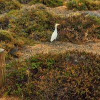 Vogel im Naturschutzgebiet