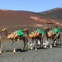 Geführte Ausflüge auf Lanzarote