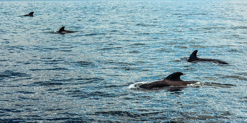 Wal und Delfinbeobachtung