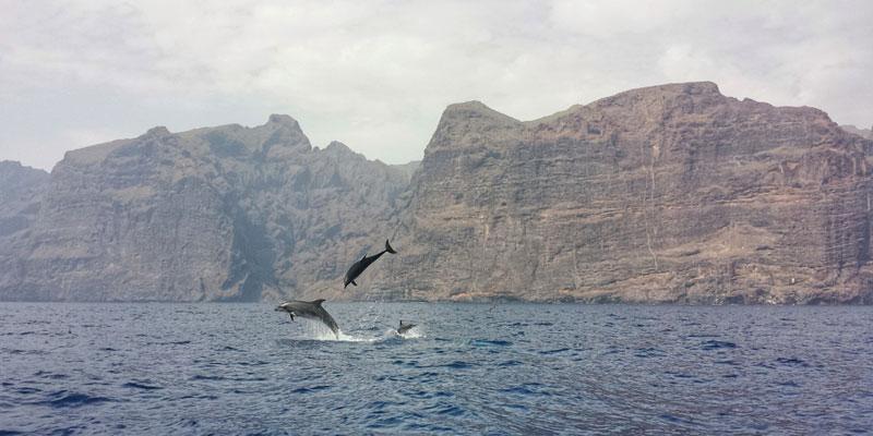 Delfin und Wal Beobachtungstour