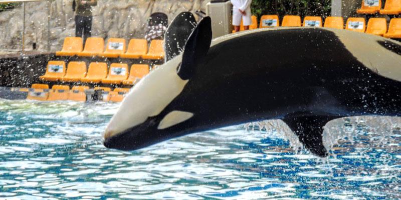 Orcashow